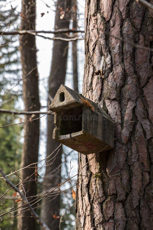 Mały ptaka stół na dużym starym drzewie zdjęcie stock