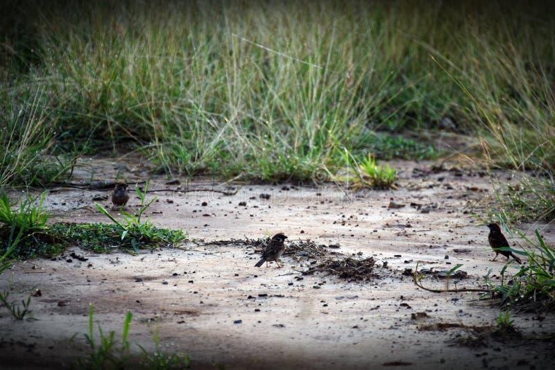 Mały ptasi znaleziska jedzenie w ranku obrazy royalty free