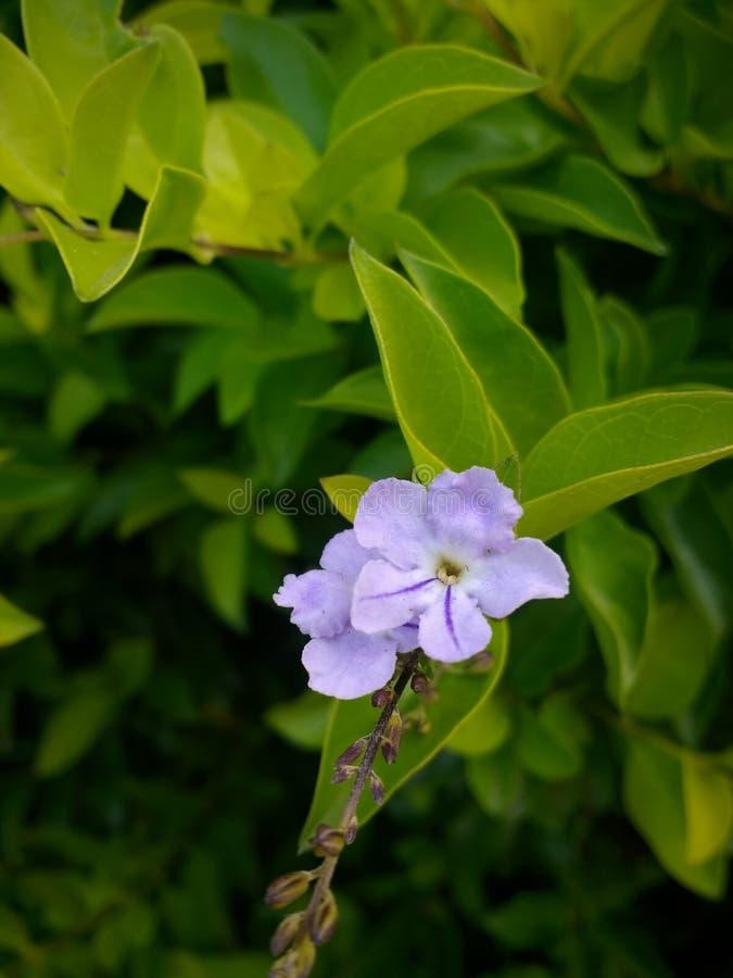 Mały purpura kwiat, liście i obraz stock
