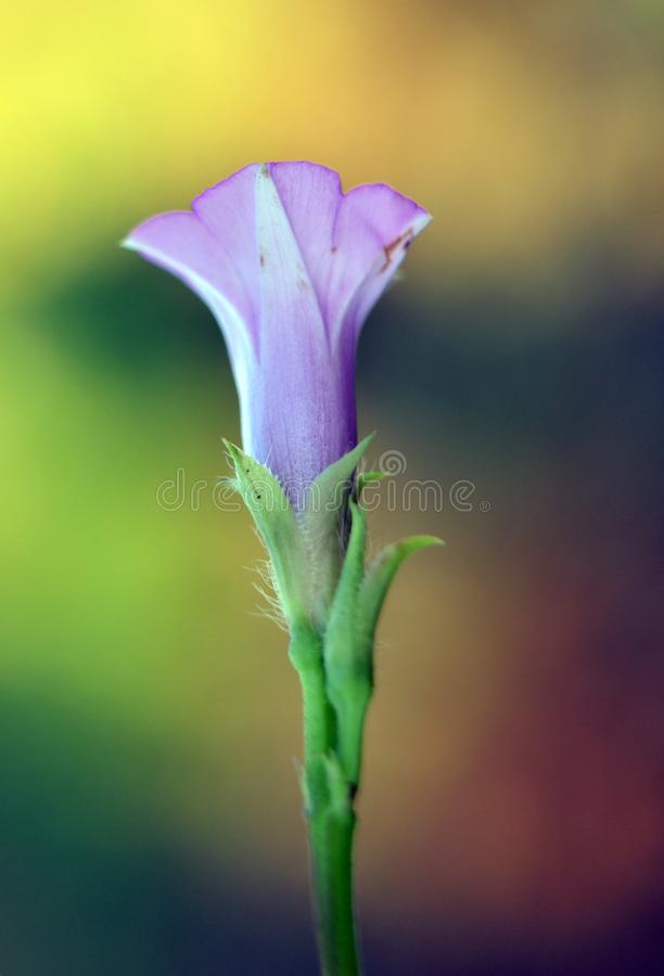 Mały purpurowy tubowy kwiat zdjęcie royalty free