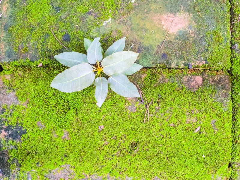 Download Mały Rośliny I Mech Dorośnięcie Na Cegle Zdjęcie Stock - Obraz złożonej z ziołowy, mech: 57668548