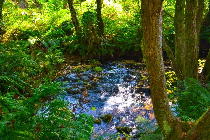 Mały rzeczny spadać przez zielony lasowy pełnego roślinność Pur fotografia stock