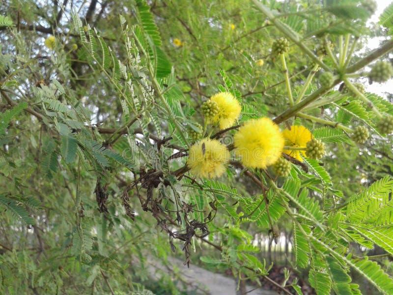 Mały słodki kwiat zdjęcia stock