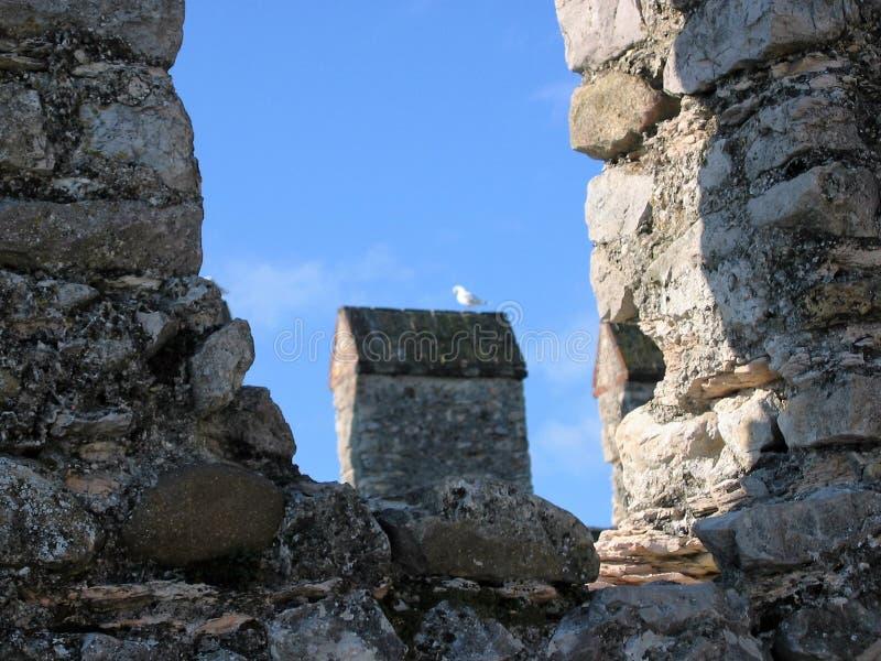 Mały Seagull część antyczne granicy miasto Sirmione na jeziorze Garda w Włochy zdjęcia stock