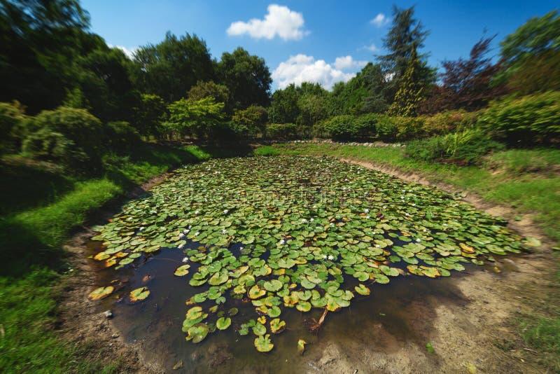 Mały staw z wodnymi lelujami przy Karaca arboretum w Yalova, Turcja fotografia stock