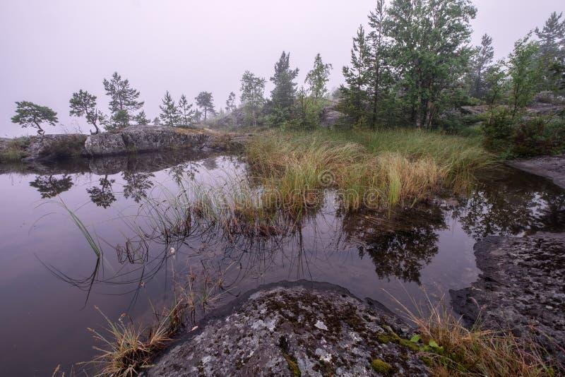 Mały staw zakrywający mgłą obraz stock
