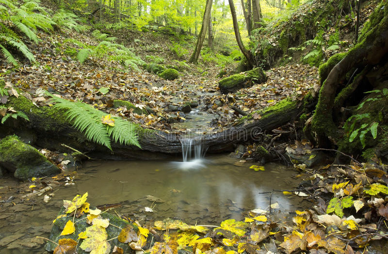 Mały strumień spadać nad drzewnym bagażnikiem. fotografia stock