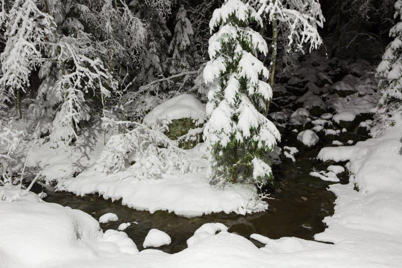Mały strumień w śnieżnym lesie fotografia royalty free