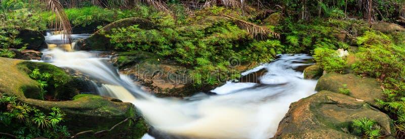 Mały strumień w tropikalny las deszczowy panoramie zdjęcia stock