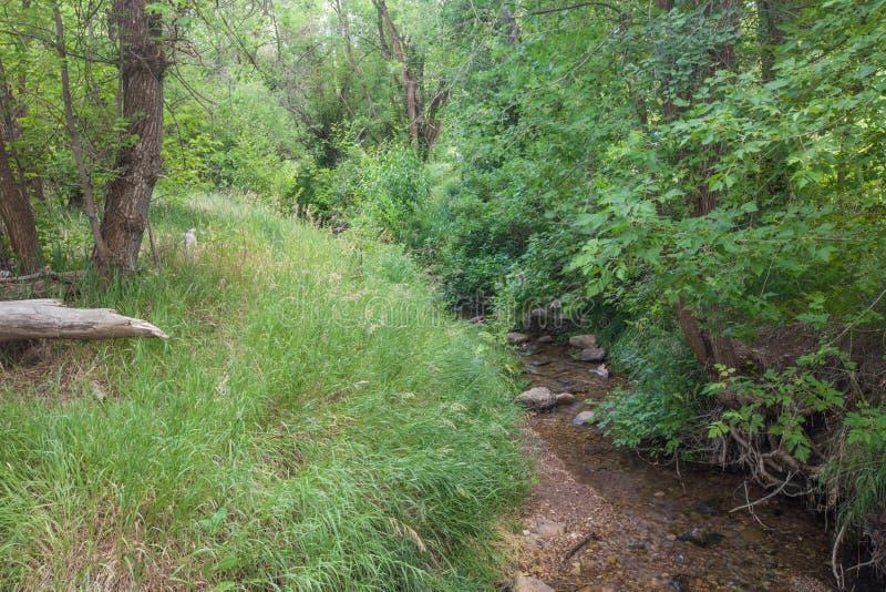 Mały szczebiotliwy strumyk przy kaskadą Skacze park narodowy fotografia royalty free