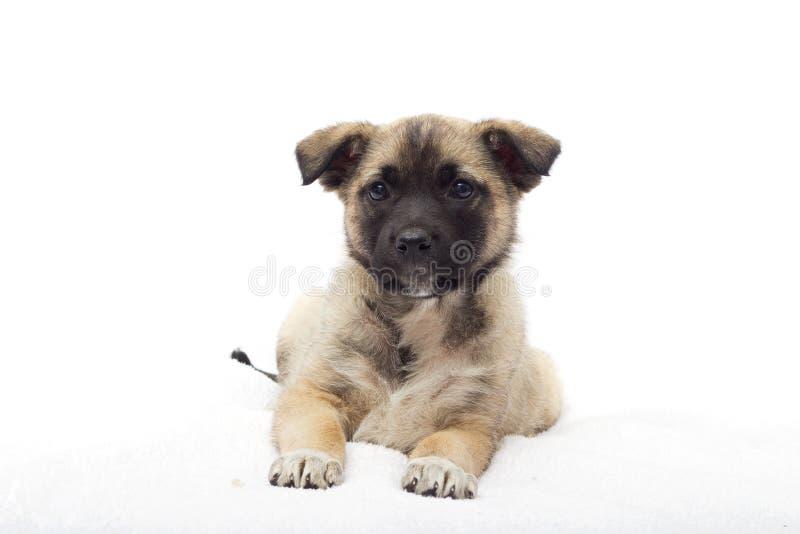 Download Mały szczeniaka patrzeć zdjęcie stock. Obraz złożonej z zwierzęta - 53786798