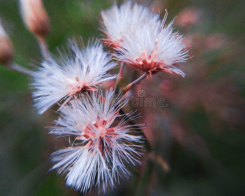 Ma?y trawa kwiat patrzeje pi?knym w makro- strzale zdjęcia royalty free