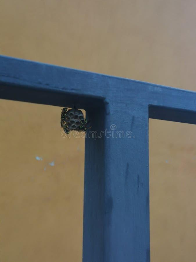Mały ul naturalne pszczoły obrazy royalty free