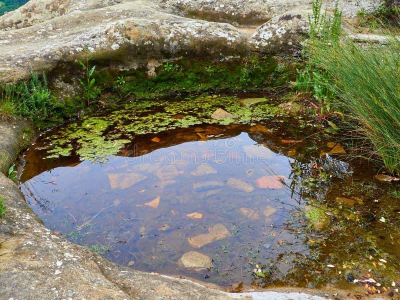Mały watter staw przy wierzchołkiem góra w Savassona lesie oprócz ` Ermita De Sant Feliuet `, właśnie fotografia stock