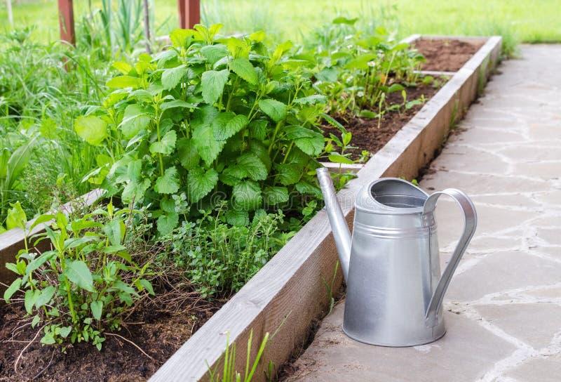 Mały zielarski ogród i metalu podlewania puszka Ogrodowy łóżko z spearmint i greenery fotografia royalty free