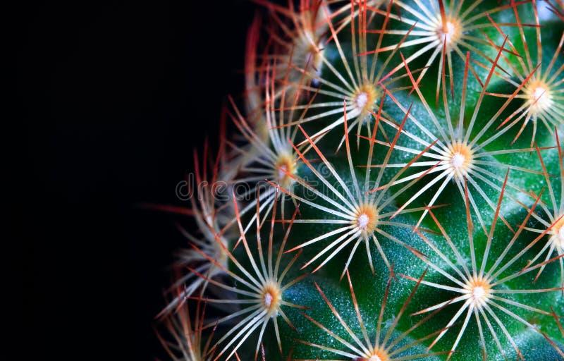 Mały zielony kaktus z jaskrawymi pomarańczowymi kręgosłupami fotografia stock