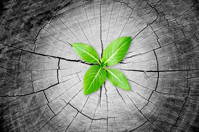 Mały zielony rozsadowy dorośnięcie od drzewnego fiszorka fotografia royalty free