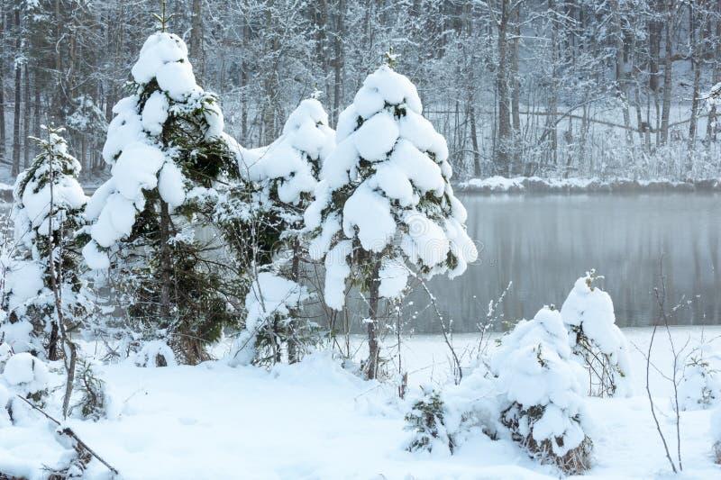 Mały zima strumień z śnieżnymi drzewami obrazy royalty free
