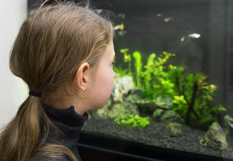 Małych dziewczynek spojrzenia przy rybą obraz stock