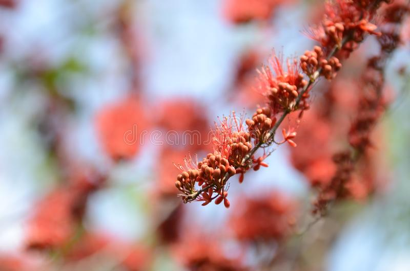 Małych kwiatów czerwony pomarańczowy Piękny kwiat zdjęcie stock