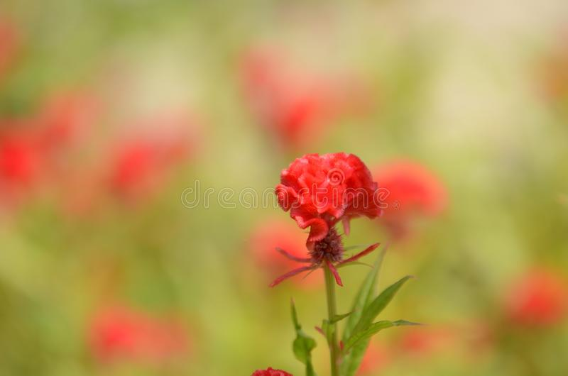 Małych kwiatów czerwony pomarańczowy Piękny kwiat w naturze zdjęcie royalty free
