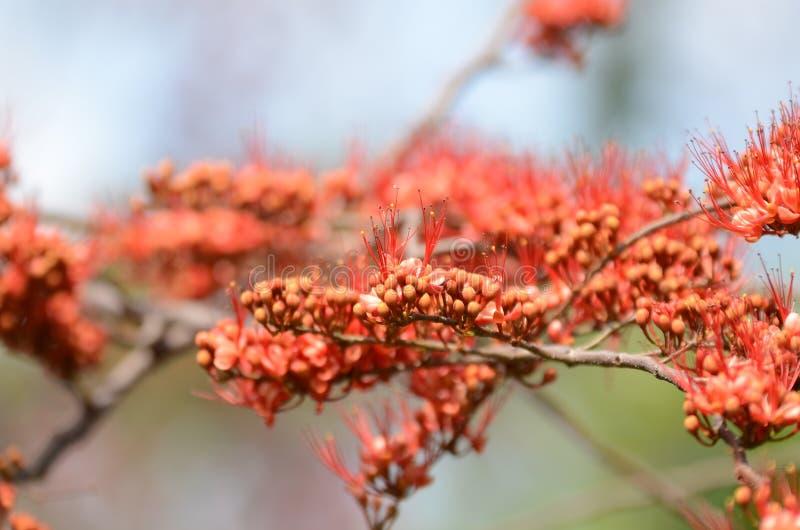 Małych kwiatów czerwony pomarańczowy Piękny kwiat w naturze fotografia stock