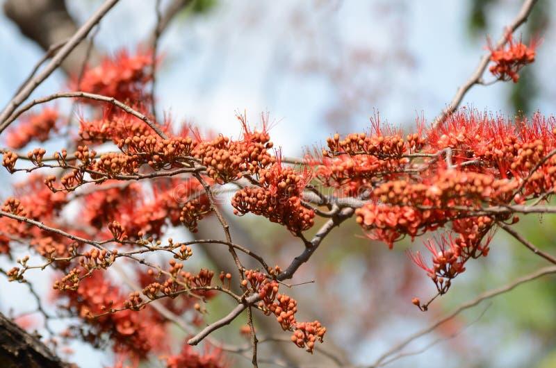 Małych kwiatów czerwony pomarańczowy Piękny kwiat w naturze zdjęcia royalty free