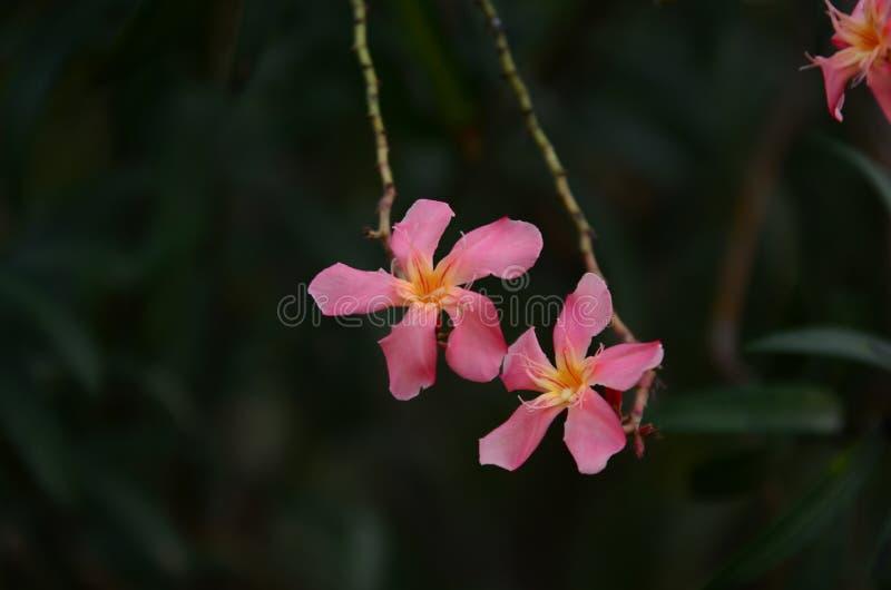 Małych kwiatów różowy czerwony pomarańczowy Piękny kwiat w naturze fotografia royalty free
