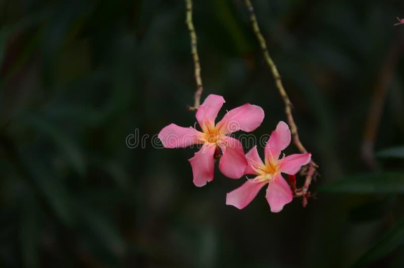 Małych kwiatów różowy czerwony pomarańczowy Piękny kwiat w naturze zdjęcia stock
