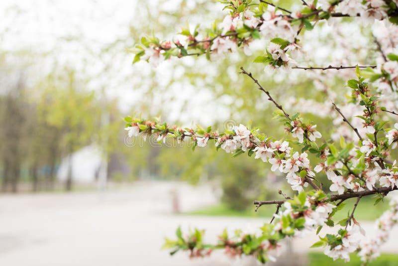 Ma?? de floresc?ncia do ramo Flores coloridas brilhantes da mola imagens de stock royalty free