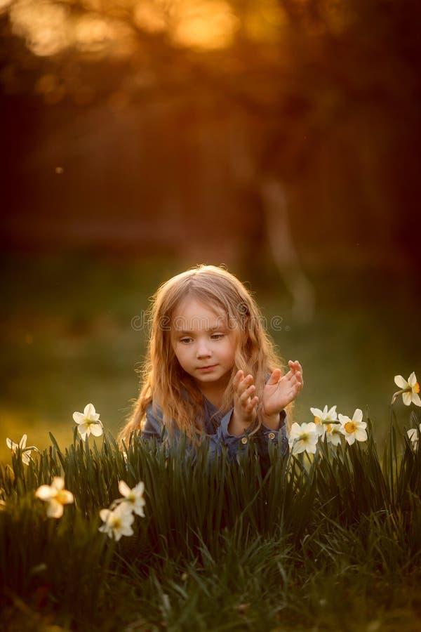 Ma?a dziewczynka plenerowy portret blisko narcyza kwitnie przy zmierzchem fotografia stock