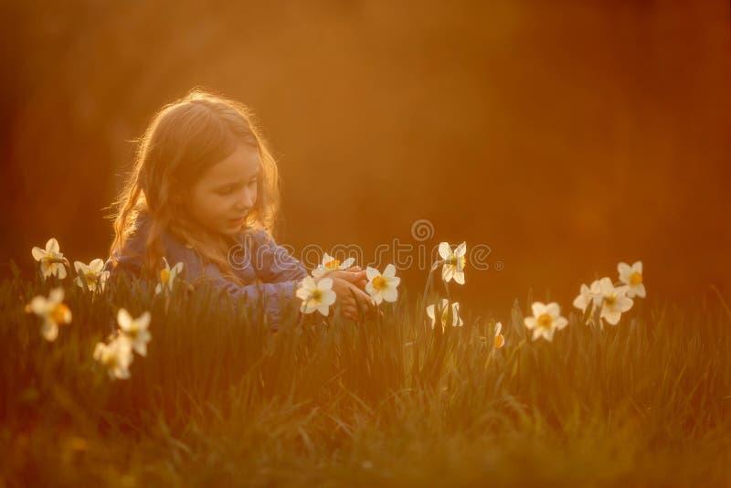 Ma?a dziewczynka plenerowy portret blisko narcyza kwitnie przy zmierzchem obraz stock