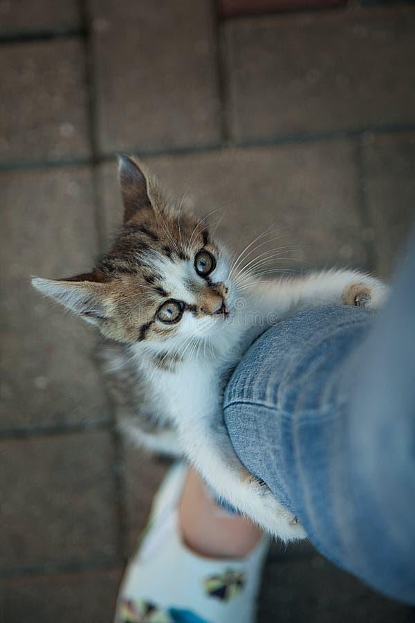 Download Małe Figlarek Wspinaczki Na Nodze Zdjęcie Stock - Obraz złożonej z wygodny, zwierzę: 106909544