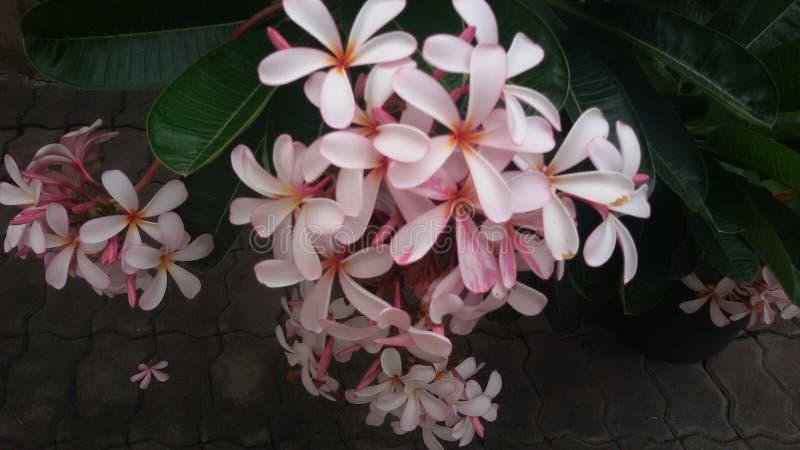 Ma fleur photos libres de droits