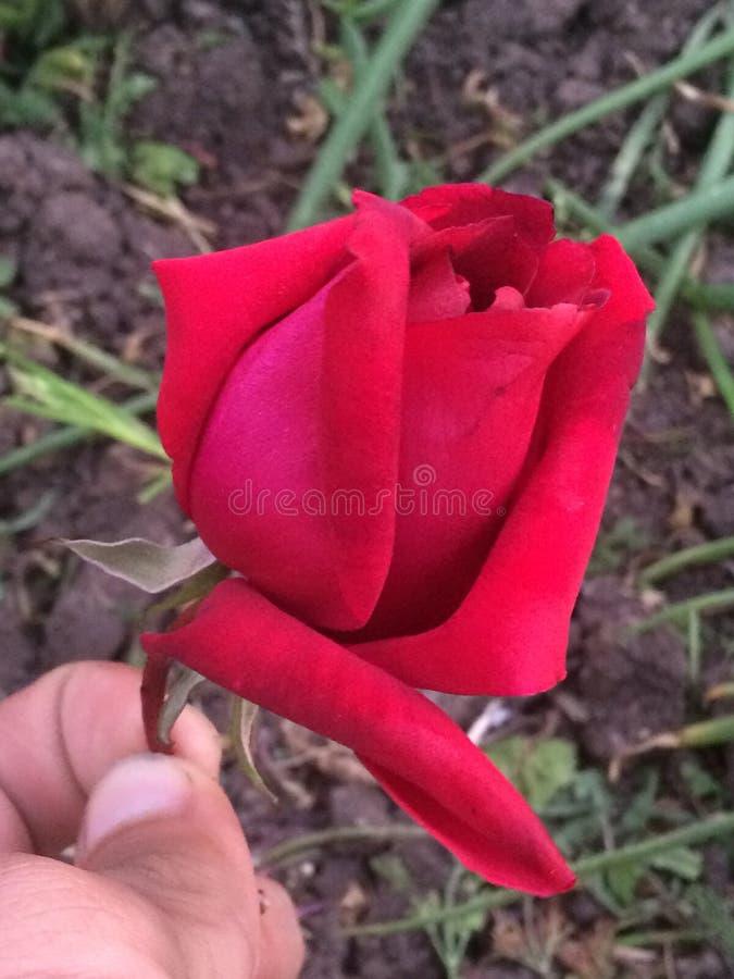 Ma fleur image stock