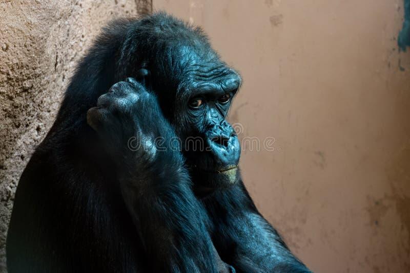 Ma?pa przy zoo obraz royalty free
