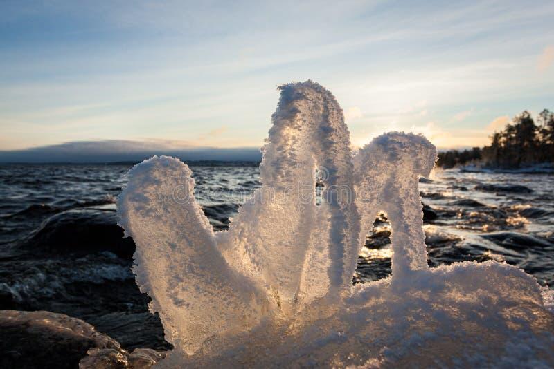 Ma?a ro?lina marzn?ca w jeziornym brzeg przy zimnym zima rankiem zdjęcie royalty free