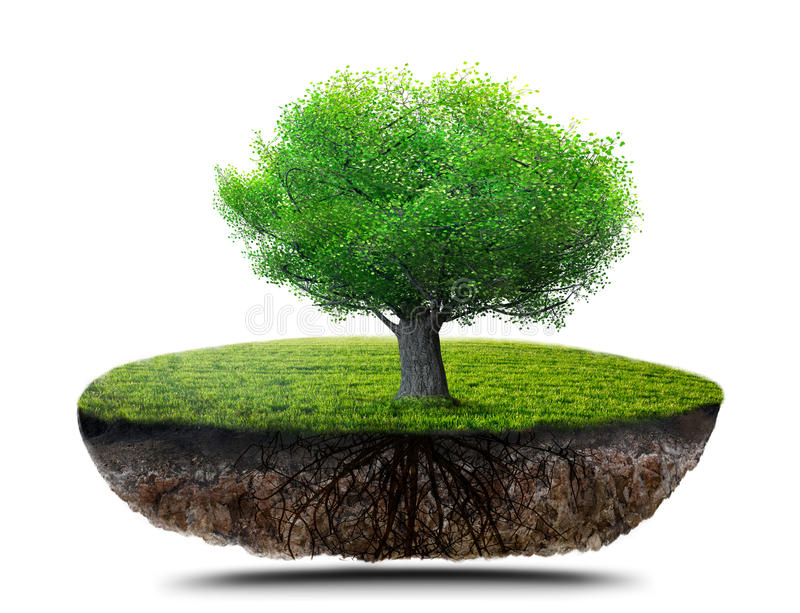 ma swoje korzenie drzewa ilustracja wektor