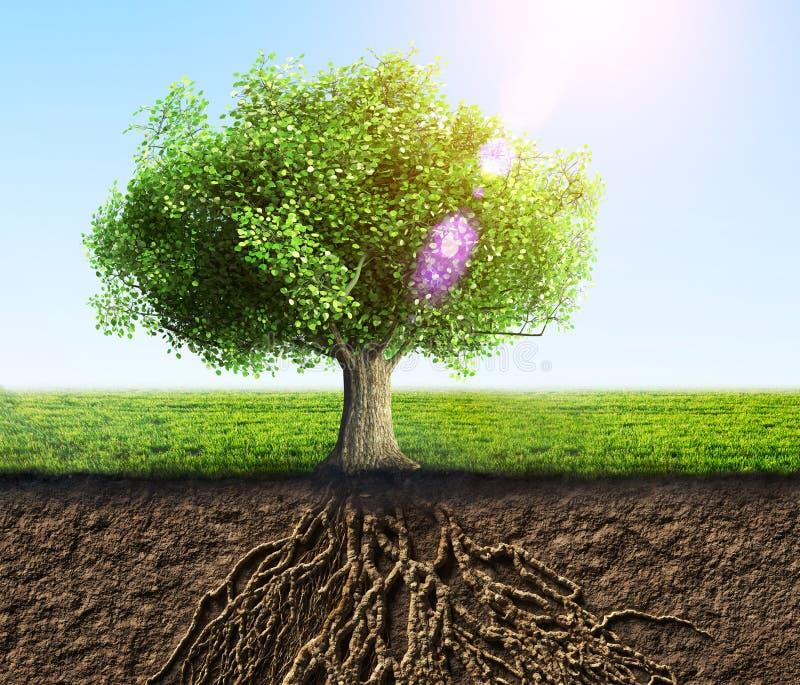 ma swoje korzenie drzewa royalty ilustracja