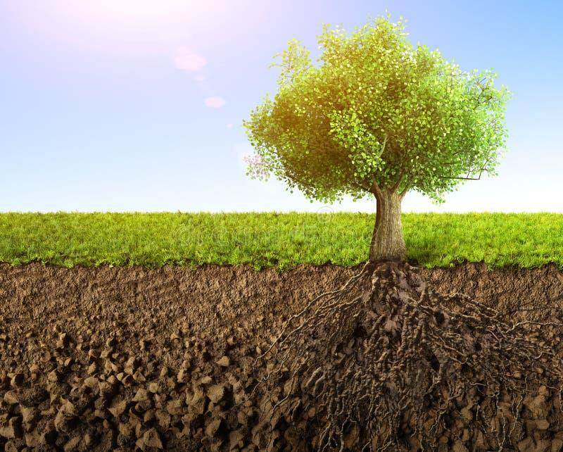 ma swoje korzenie drzewa ilustracji