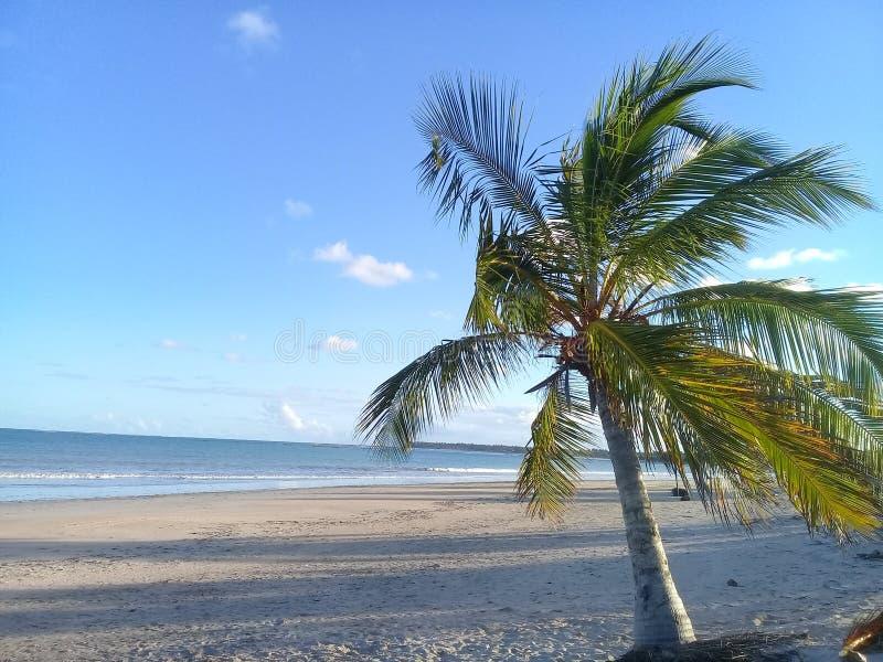 Ma?y drzewko palmowe na pla?y zdjęcie stock