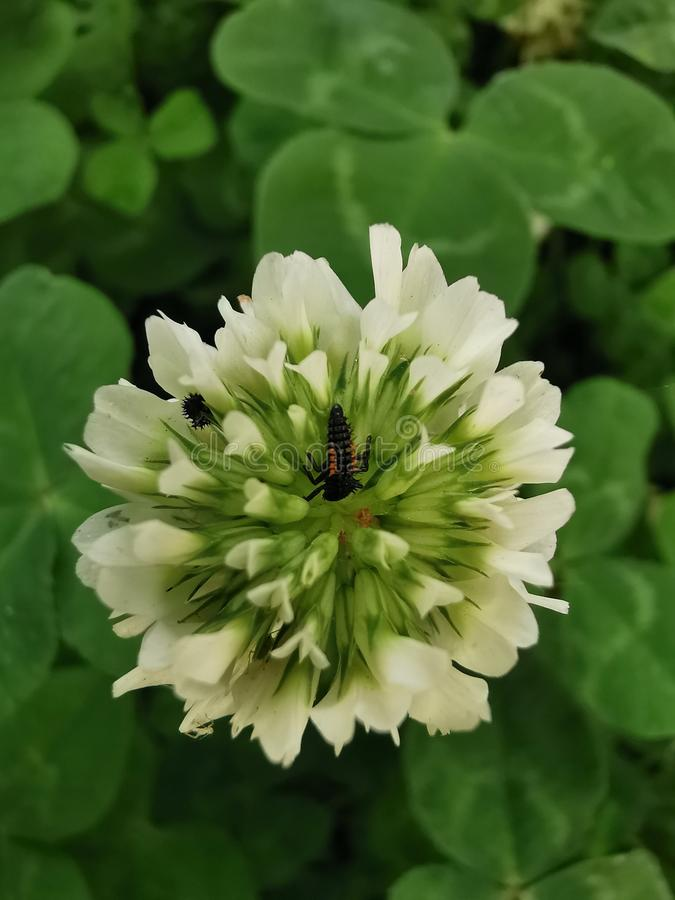 Ma?y insekt na kwiacie zdjęcie stock