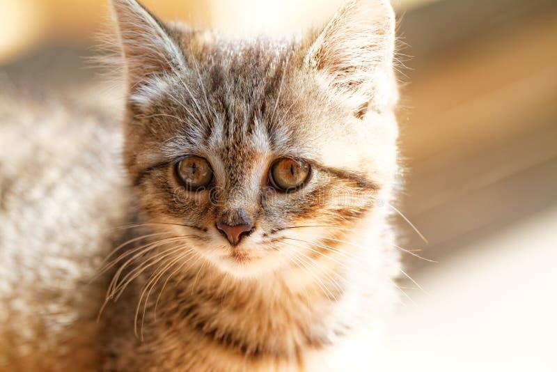 Download Mały kot zdjęcie stock. Obraz złożonej z portret, figlarka - 41953238