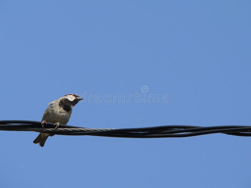 Mały ptak z niebieskim niebem 2