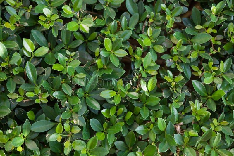 Ma?a ziele? opuszcza t?o Malutki zielony liścia tło obraz royalty free