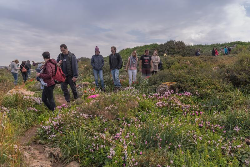 Maagan Michael, Israel - 20 Februar 2019: People are walking in a field of wild blooming flowers. Spring landscape of Israel. Natur reserve stock images