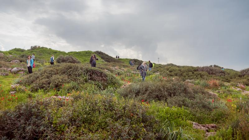 Maagan Michael, Israel - 20 Februar 2019: People are walking in a field of wild blooming flowers and taking pictures of flowers. Spring landscape of Israel stock images
