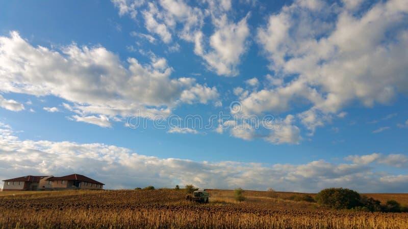 Maaidorser het maaien op een zonnebloemgebied, tegen een blauwe hemel met witte wolken royalty-vrije stock foto