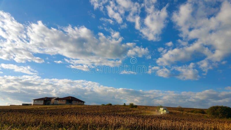 Maaidorser het maaien op een zonnebloemgebied, tegen een blauwe hemel met witte wolken royalty-vrije stock foto's