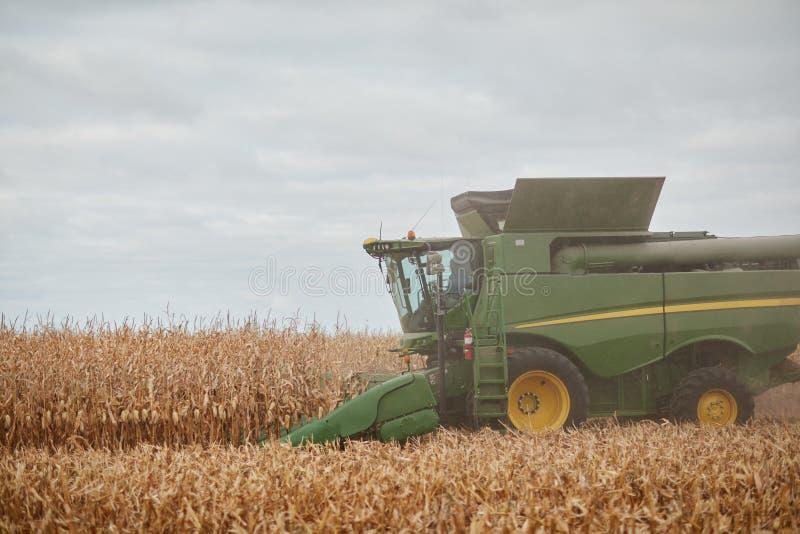 Maaidorser het snijden droge maïsinstallaties stock foto